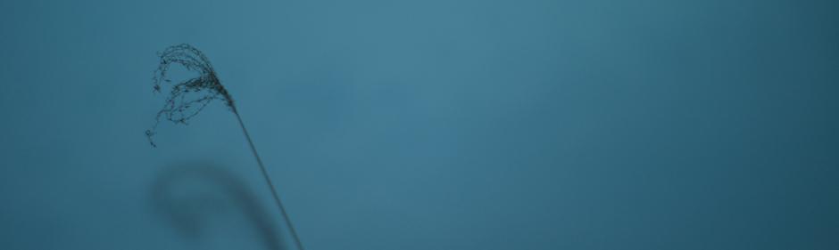 Menu | Graphic & Web / nicoglass.へようこそ